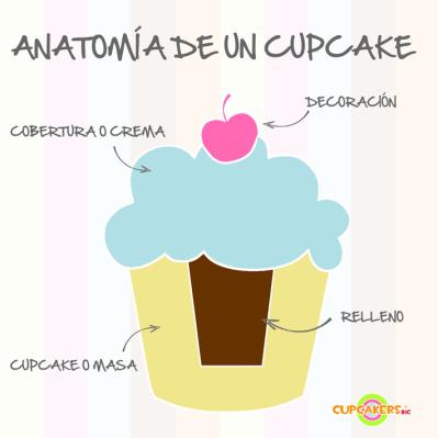Anatomía-Cupcake
